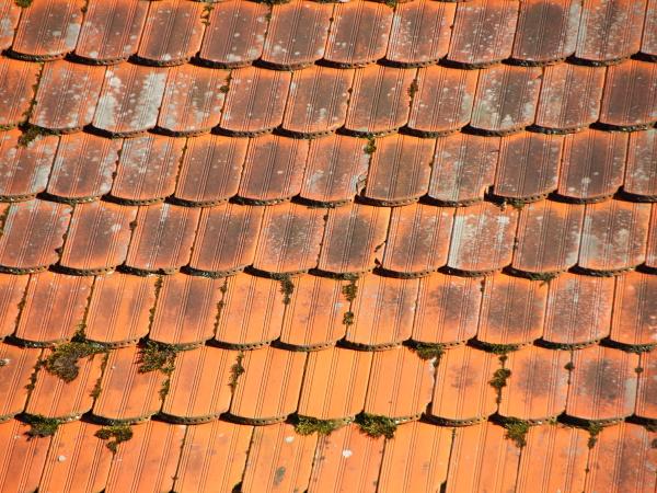 dach z czerwonego dachu z alga