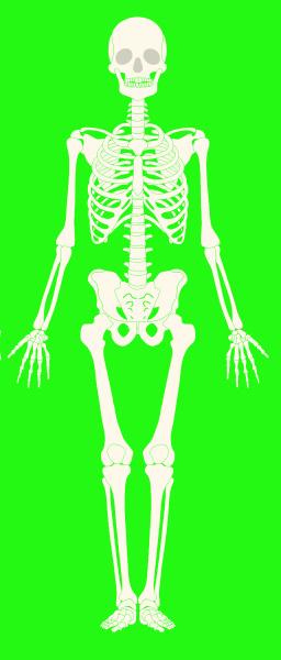skeleton, full, body, white, bones, green - 28215341