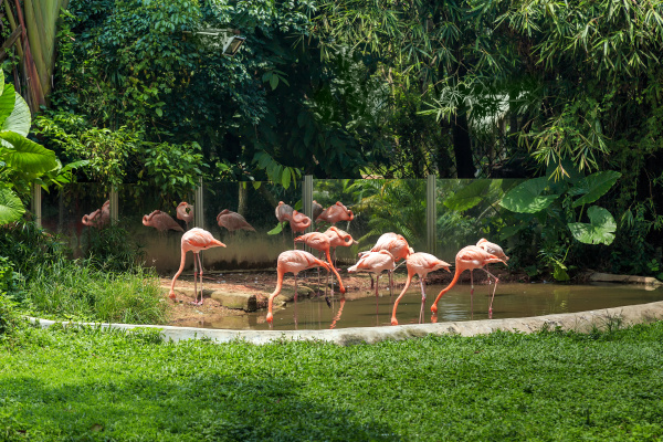 flamingos, at, the, zoo, on, a - 28216191