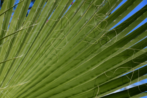 palm, leaves, in, the, province, of - 28217163