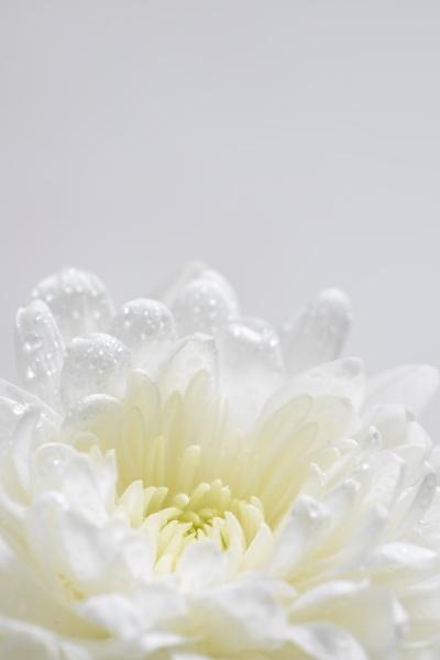 martwa natura kwiatow na bialym tle