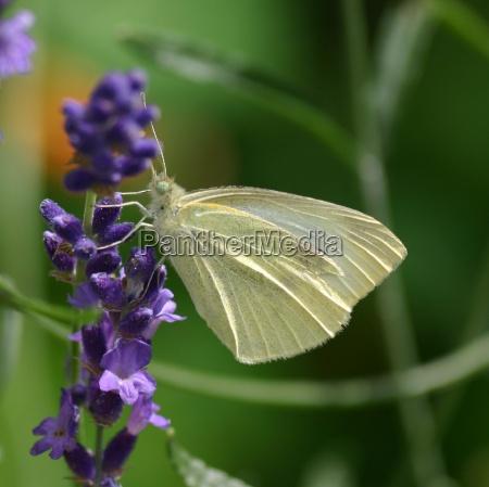 ogrod ogrodek zwierze kwiat kwiatek zawod