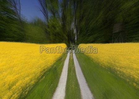 niebieski jazda zielony rzepak pole rzepaku