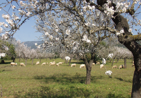 wiosna na majorce