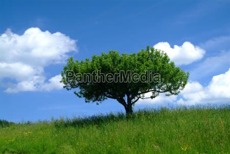 drzewo z nieba 1