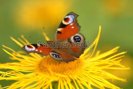 motyl na kwiat 9