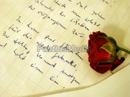 sztuka kwiat kwiatek roza zawod roslina
