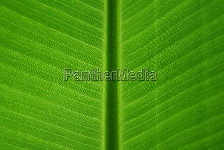 lisc zielony banan projekt formgebung webdesign