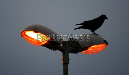 ptak ptaki latarnia swietlowka lichtquelle latarka