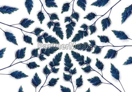 niebieska trawa