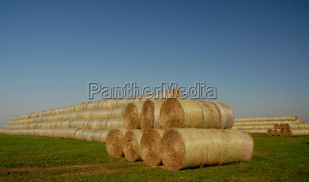 karma zwierzeta zwierzatka gospodarstwo rolnictwo pole