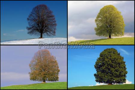 drzewo kamien pestka zima zimowy liscie
