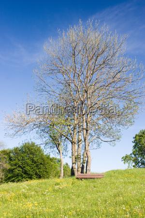 niebieski drzewo sadzenie sadzic zielony kwiat
