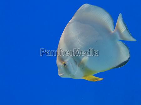 niebieski kolor podwodne morskich aqua wodne