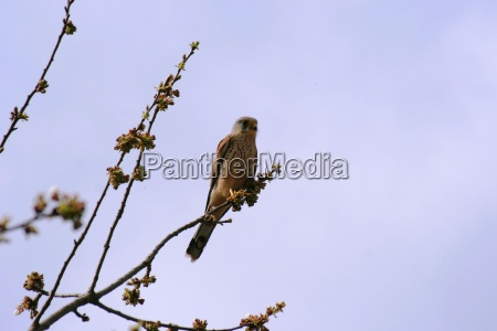 drzewo zwierze ptak ciekawosc czujny ptaki