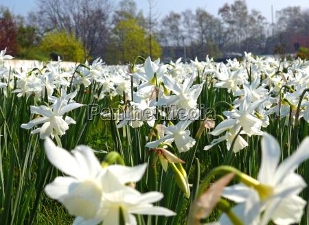 park kwiat kwiatek zawod roslina drzewa