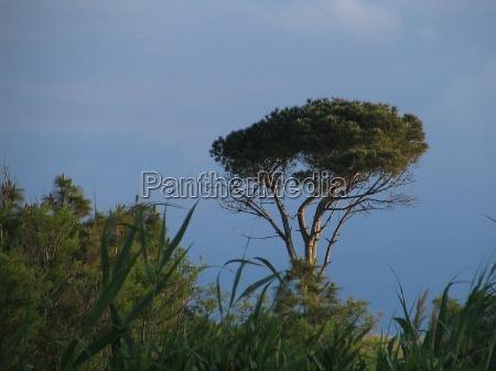 drzewo drzewa plaza brzegach brzeg nadmorski