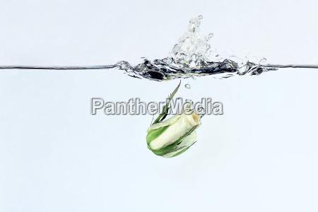 splash iii