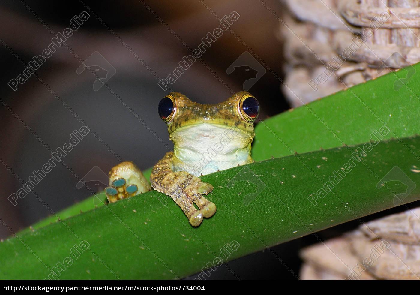 żaba, 2 - 734004