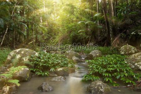 rainforest rays