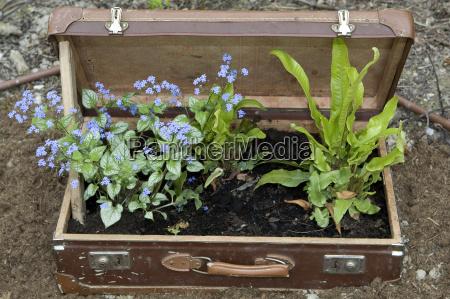 sadzenie sadzic walizki