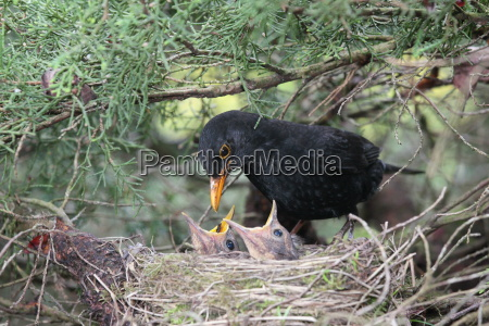 ptak ptaki rodzice pielegnacja care gniazdo