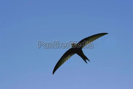 lot zeglarz jerzyk latac meszki latanie