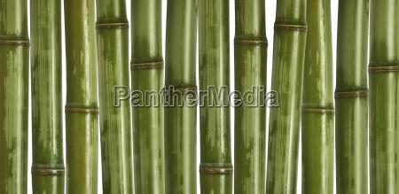 hard bamboo background