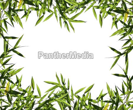 bamboo leaf isolated on white
