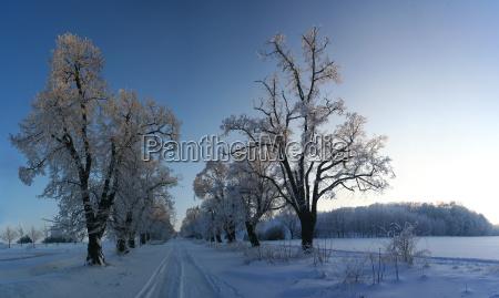 drzewo drzewa zima zimowy biel pruinose