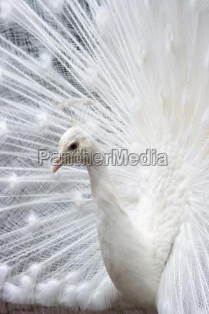 zwierze ptak zwierzeta zwierzatka ptaki pioro