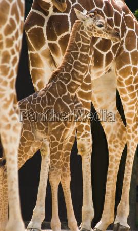 zwierze ssak zwierzeta zwierzatka ssaki safari