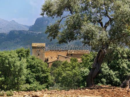 finca w olive grove