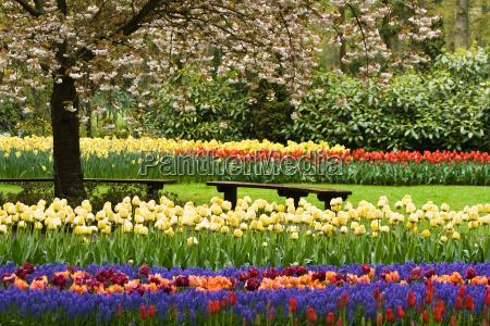 ogrod ogrodek kwiat kwiatek zawod roslina