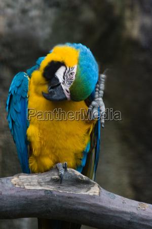 zwierze ptak zwierzeta zwierzatka ptaki papugi