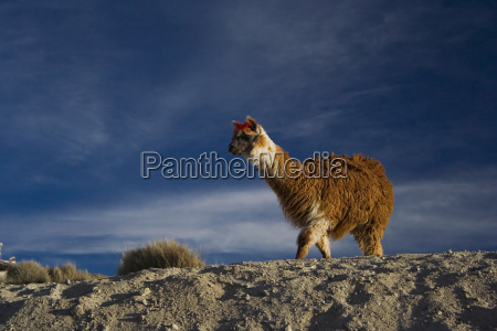 park narodowy chile