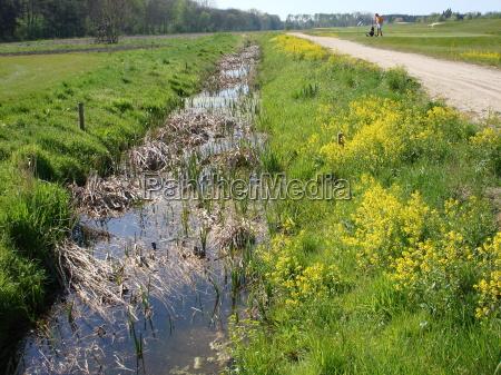 rzepak wiosna krynica golf river rzeka