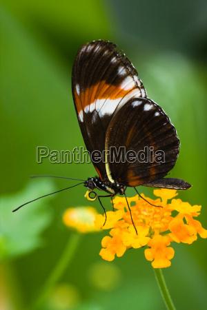 zwierze owad owady insekty motyl zwierzeta