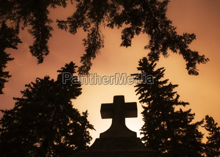 religia religijne wiara wierzacy symbolicznie drzewo