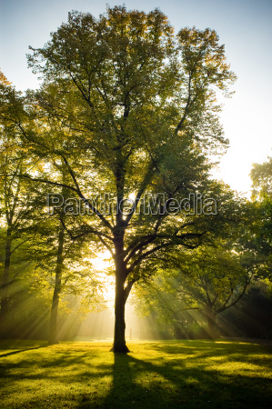 podswietlany drzewa