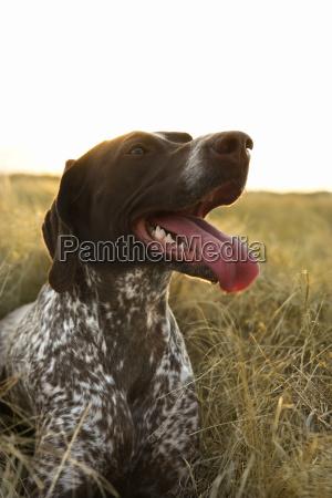 profil zwierze zwierze domowe ssak pole