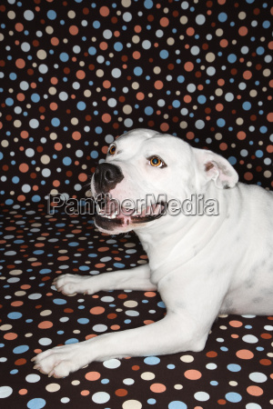 dog against polka dot background