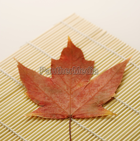 maple leaf on bamboo mat