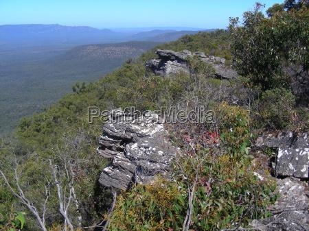 australia piaty kontynent zinnen eukaliptus natura