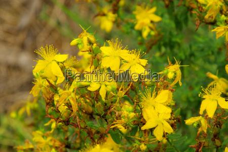 drzewa rozkwitac kwitnienie kwiaty herb ziele