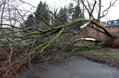 drzewo unwetter wywrocony sztorm burza wiatrowa