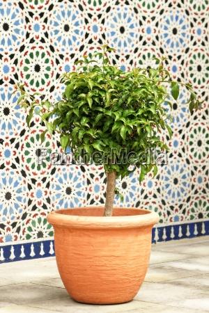 roślina, doniczkowa - 3138747