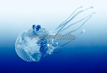 zycie morskie