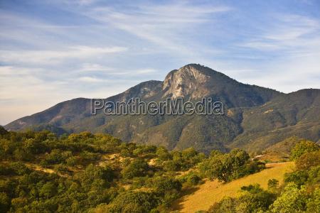 drzewa na krajobraz toczenia z gory