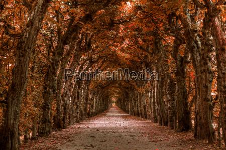 jesienny